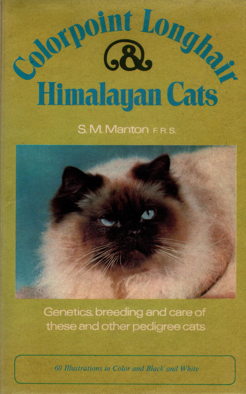 Image for Colorpoint Longhair & Himalayan Cats